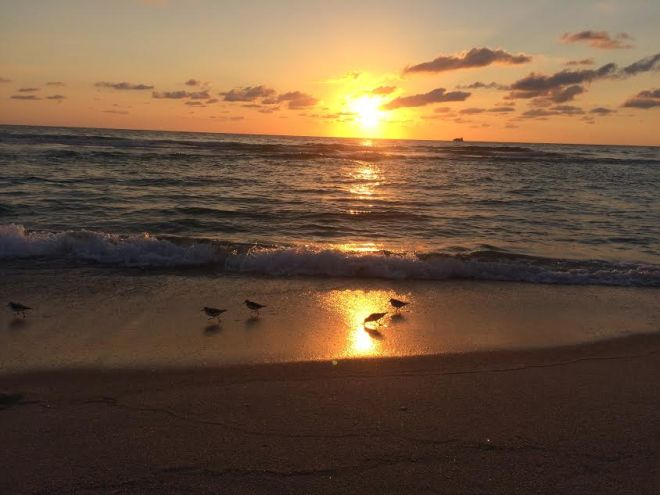 sunrise beach birds