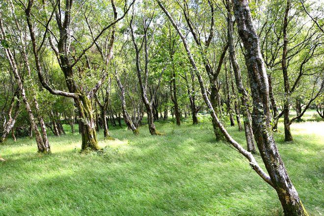 Walk to Glendalough Upper Lake in Wicklow Mountains